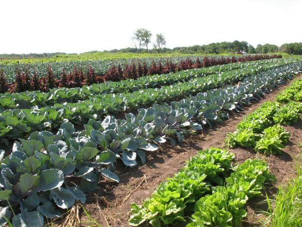 organic-farm-go-organic3